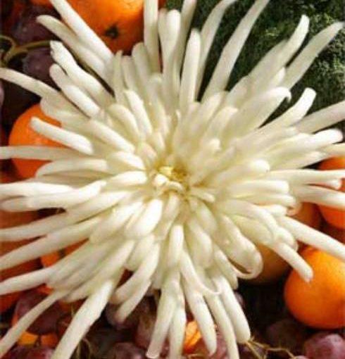 Карвінг з овочів для початківців: квітка хризантема з пекінської капусти, фото