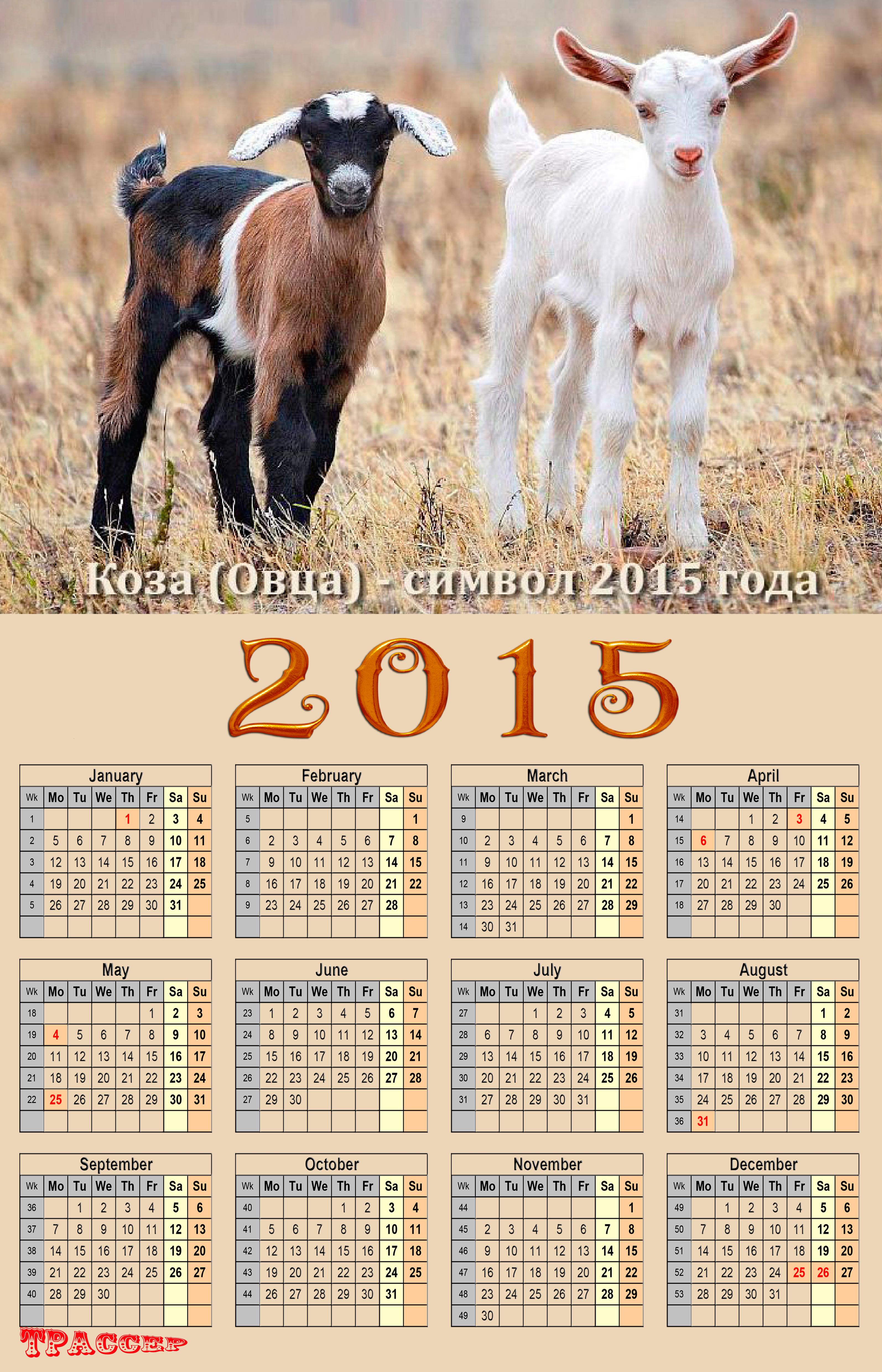 Шаблон календаря года козы 2015 с изображением той же козы, символикой которой будет весь 2015 год. .
