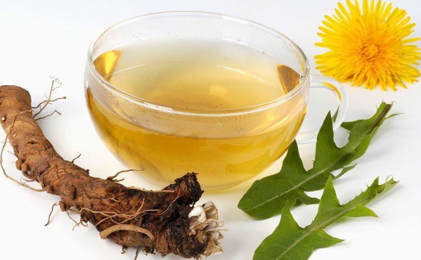 Корінь кульбаби: лікувальні властивості, застосування і протипоказання в народній медицині, заготівля на зиму. Кава і чай з коренів кульбаби.