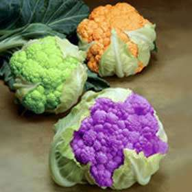 Цвітна капуста – корисні властивості, користь і шкода для організму. Чому капуста цвітна, як вона виглядає і чим корисна.