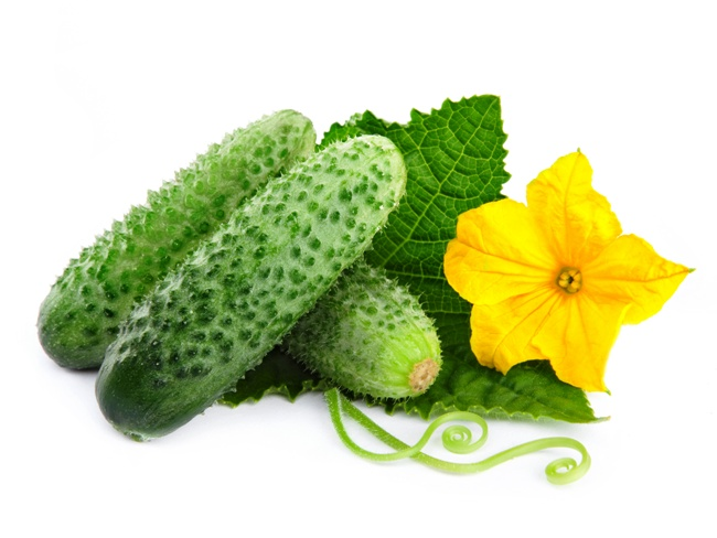 Свіжі огірки – користь і шкода для організму: властивості, вітаміни і калорійність огірків