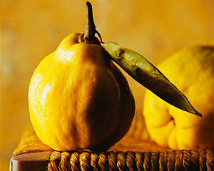 Прекрасна айва – дерево і плоди: опис, властивості, користь і шкода для організму.