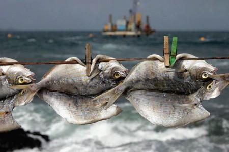 Як солити рибу для сушки сухим способом.