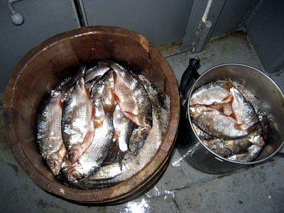 Домашнє засолювання риби в розсолі – як правильно солити рибу в розсолі.