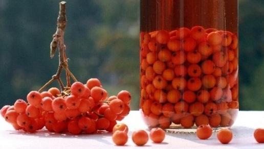 Маринована горобина – оригінальний рецепт домашньої заготовки з горобини червоної на зиму.