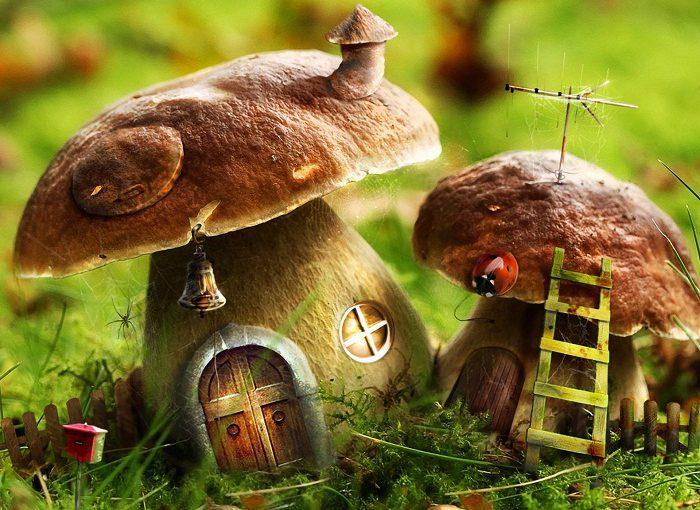 Способи заготівлі грибів на зиму. Первинна механічна чистка та обробка грибів
