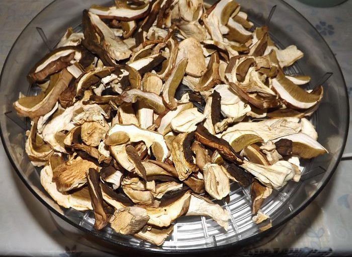 Як сушити гриби в домашніх умовах в сушарці електричній (з фото).