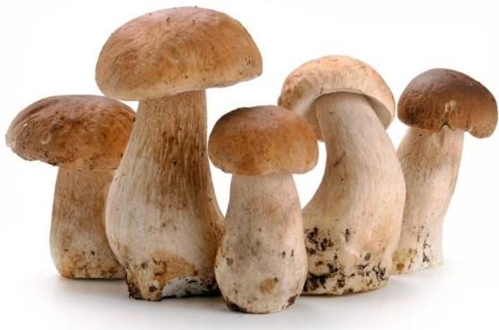 Сушка білих грибів в домашніх умовах: як правильно сушити гриби на зиму