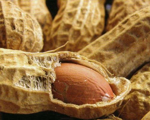 Заготівля і сушка арахісу