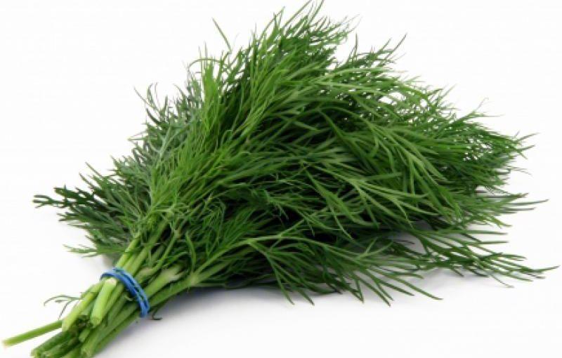 Сушений кріп: способи заготовки зелені кропу на зиму