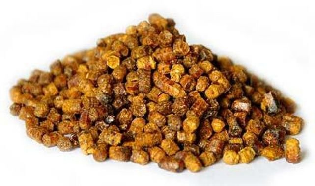 Перга бджолина: способи зберігання в домашніх умовах – як сушити пергу для зберігання