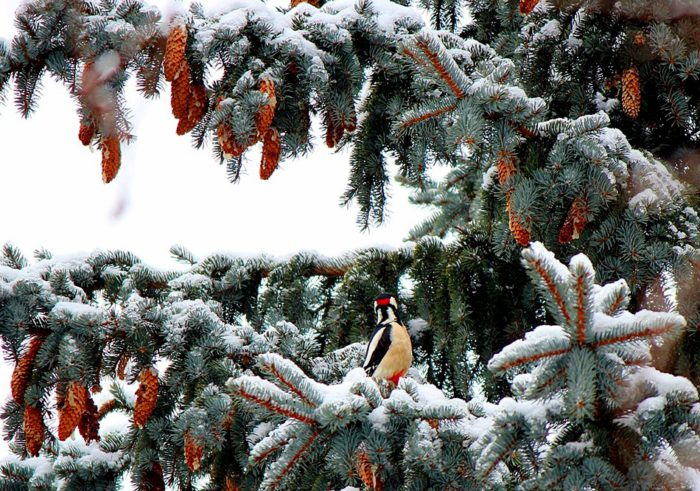 Красиві фото зимових пейзажів природи - заставки на телефон