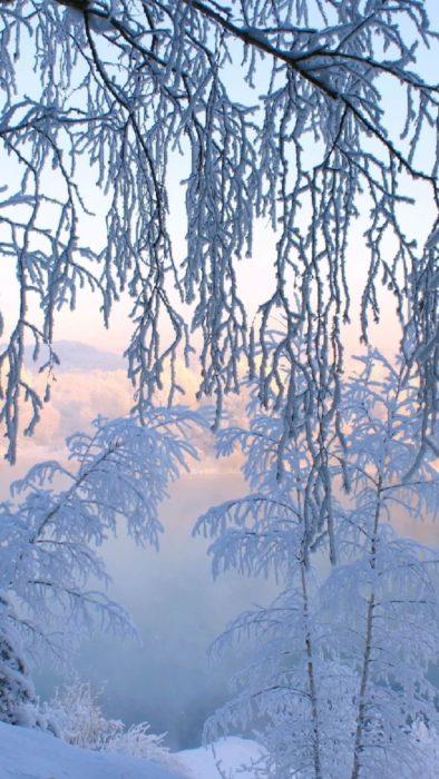 Зима дуже красива картинка природи на айфон - гарні білі дерева