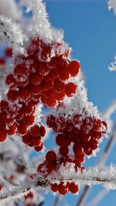 Зима гарна картинка на телефон - сніг, ягоди горобини