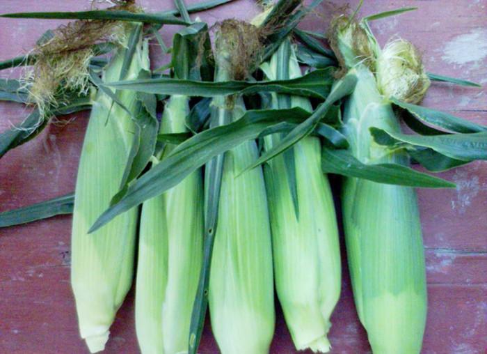 Консервована цукрова кукурудза на зиму