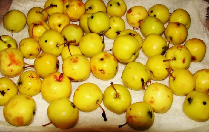 Сушені яблука в духовці
