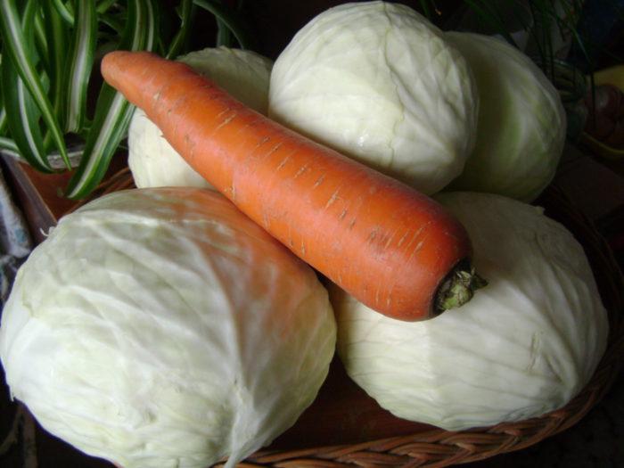 Квашена капуста з кмином і морквою на зиму по-карельські