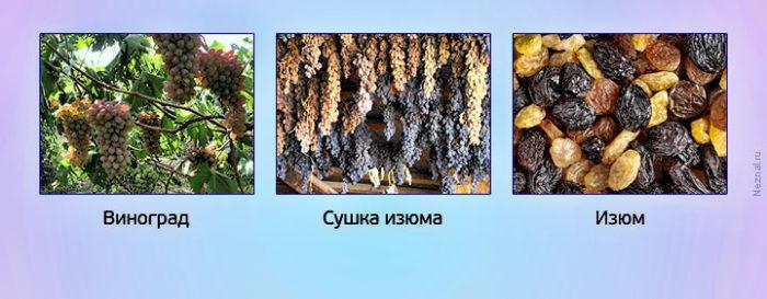 виноград-сушка-родзинки