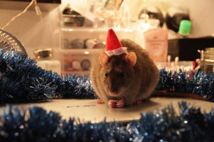 Безкоштовні фото-шпалери з мишами на Новий рік на робочий стіл