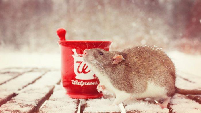 Гарні шпалери з новорічними щурами і мишами на робочий стіл
