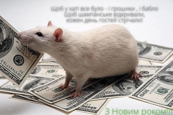 Прикольні листівки з Новим 2020 роком Пацюка