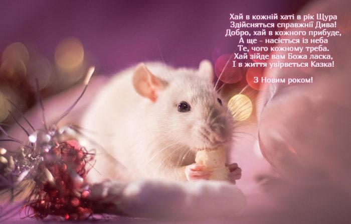 Новорічні листівки з мишками та щурами - короткі ві