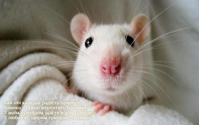 Оригінальні листівки з новорічними мишками, щурами, пацюками та привітаннями у віршах