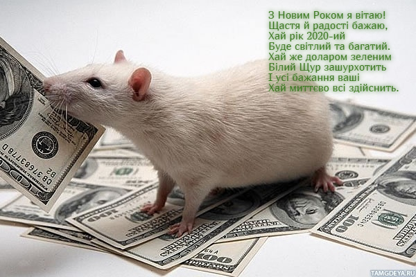 Прикольні листівки з Новим 2020 роком Пацюка, Щура, Миші