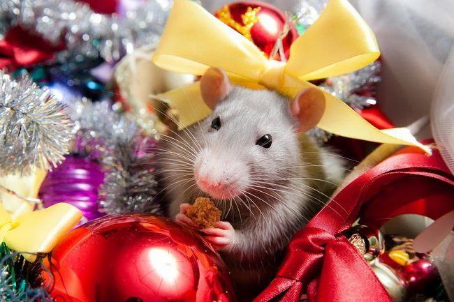 Красиві новорічні картинки з щуром, пацюком, мишкою