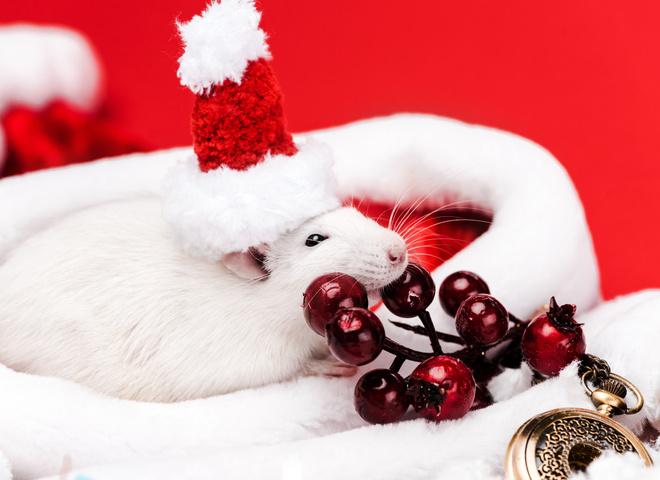 Стильні прикольні картинки з новорічними щурами, пацюками, мишами