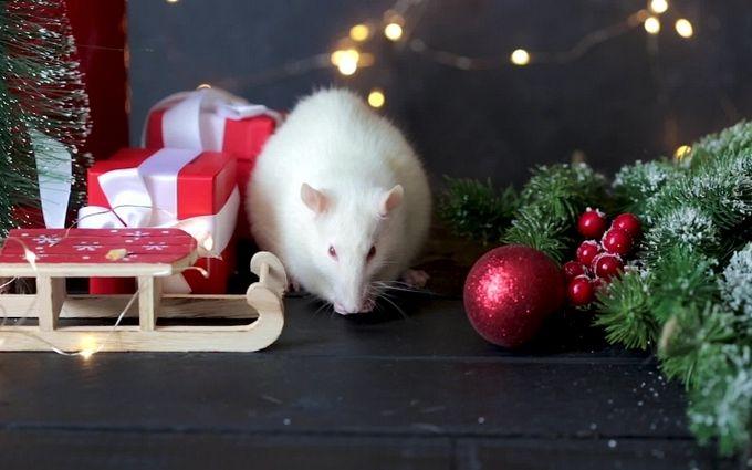 Сучасні картинки з мишками