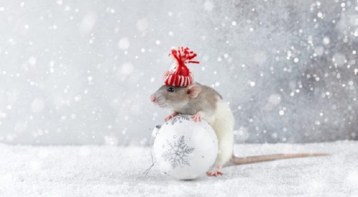 Красиві картинки з мишами