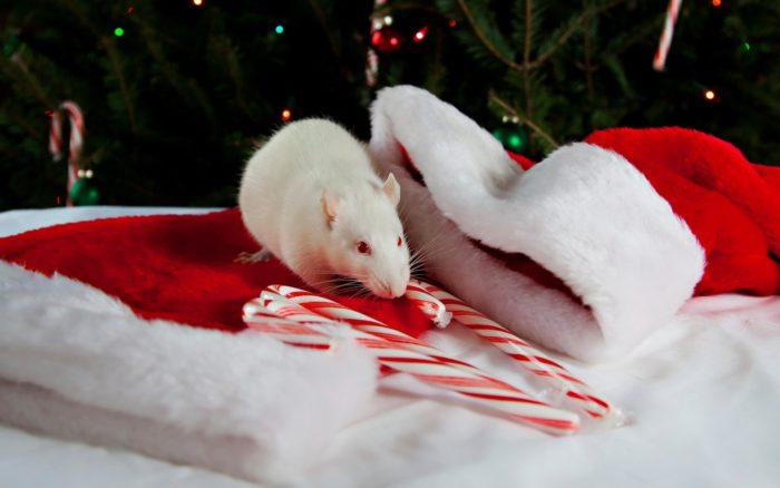 Незвичайні картинки з новорічними щурами і мишами