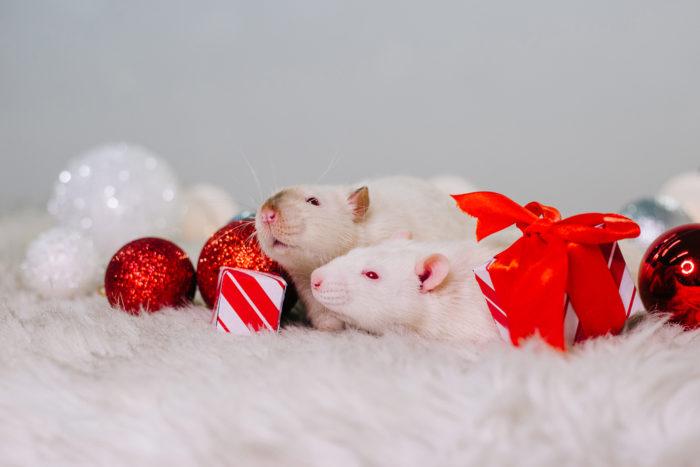 Новорічні картинки з мишками та щурами