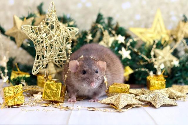 Новорічні картинки з пацюками і мишами