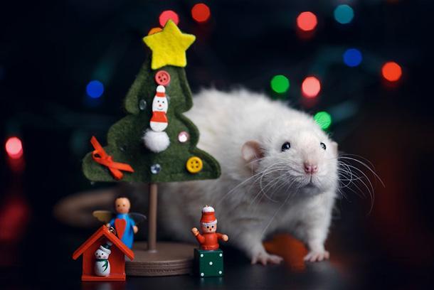Новорічні картинки на рік Щура-Пацюка