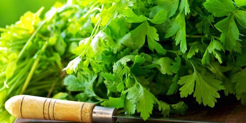 Як сушити петрушку в домашніх умовах – сушена на зиму зелень і корінь петрушки