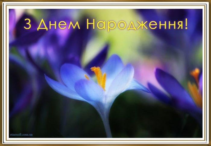 Вітальна відкритка з днем народження з квітами - весняні крокуси