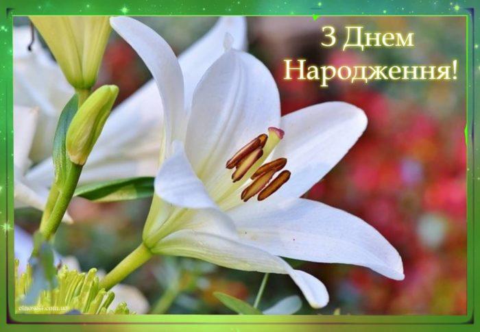 Красива листівка з днем народження - ніжні квіти білі лілії