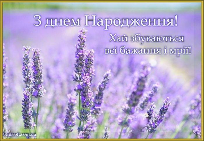 Вітальна листівка з днем народження - польові квіти