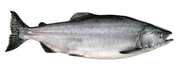 Як смачно посолити нельму – малосольна риба на кожен день
