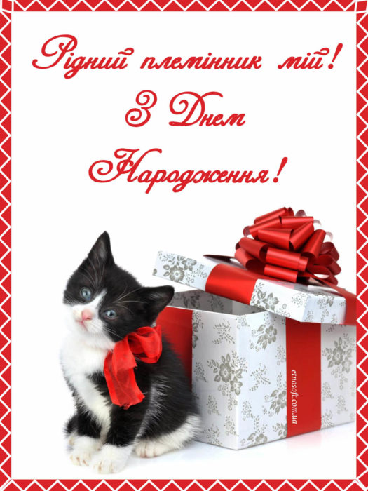 Гарна листівка з Днем Народження для племінника на смартфон, з подарунком та котом