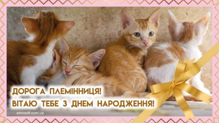 Вітальна листівка з Днем Народження племінниця з котиками