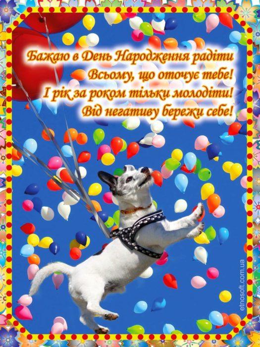 З Днем Народження листівка-привітання з гумором, з собачкою та кульками