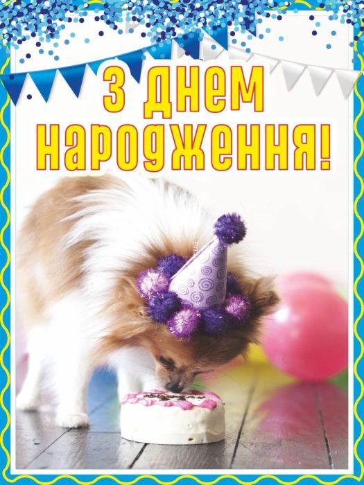 З Днем Народження племінниця прикольна листівка-привітання з собакою, тортом, кульками