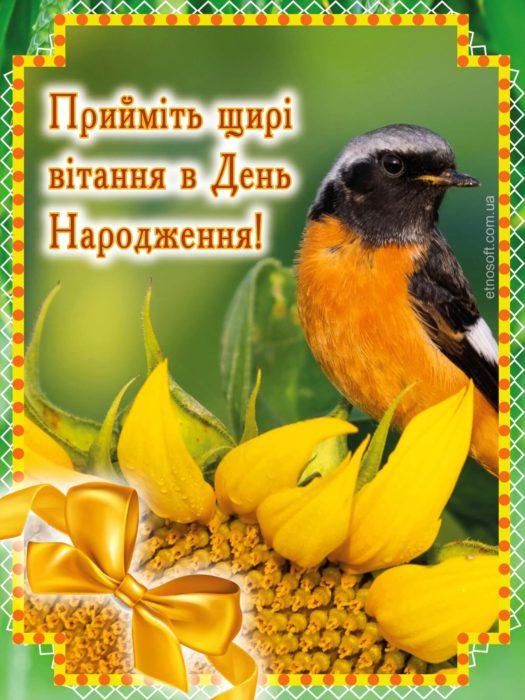 З Днем Народження картинка-привітання з пташкою