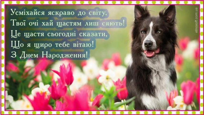 Красива листівка з Днем Народження з собакою