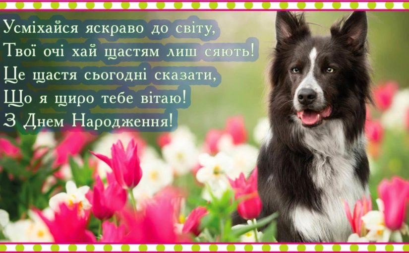 Листівки з Днем Народження з тваринами: анімаційні картинки, красиві відкритки, музичні відео-привітання з котами, собакою, пташками