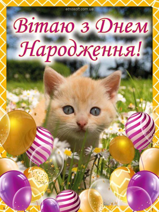 Цікава листівка на День Народження з котиком