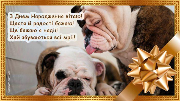 Оригінальна вітальна картинка на День Народження з собаками